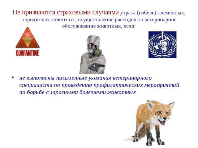 Не признаются страховыми случаями утрата (гибель) племенных, породистых животных, осуществление расходов на ветеринарное обслуживание животных, если: не выполнены письменные указания ветеринарного специалиста по проведению профилактических мероприят…