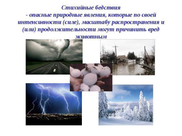 Стихийные бедствия - опасные природные явления, которые по своей интенсивности (силе), масштабу распространения и (или) продолжительности могут причинить вред животным