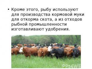Кроме этого, рыбу используют для производства кормовой муки для откорма скота, а