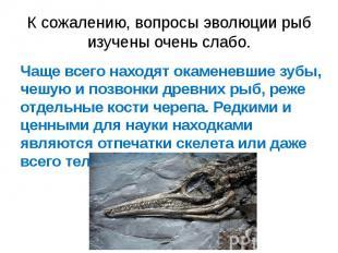 К сожалению, вопросы эволюции рыб изучены очень слабо. Чаще всего находят окамен