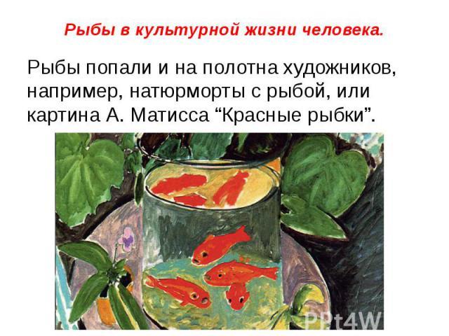 """Рыбы в культурной жизни человека. Рыбы попали и на полотна художников, например, натюрморты с рыбой, или картина А. Матисса """"Красные рыбки""""."""