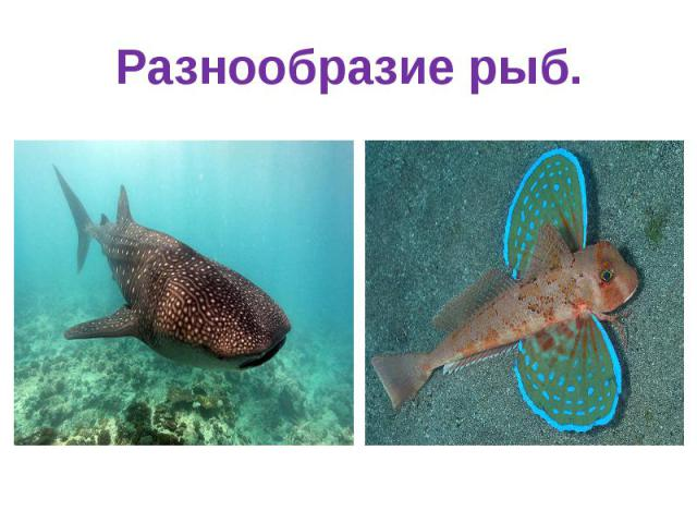 Разнообразие рыб.