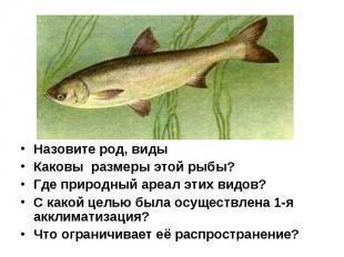 Назовите род, виды Каковы размеры этой рыбы? Где природный ареал этих видов? С к