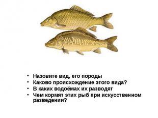 Назовите вид, его породы Назовите вид, его породы Каково происхождение этого вид