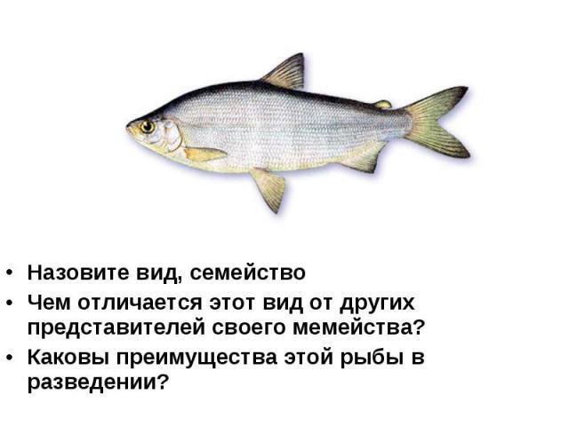 Назовите вид, семейство Чем отличается этот вид от других представителей своего мемейства? Каковы преимущества этой рыбы в разведении?