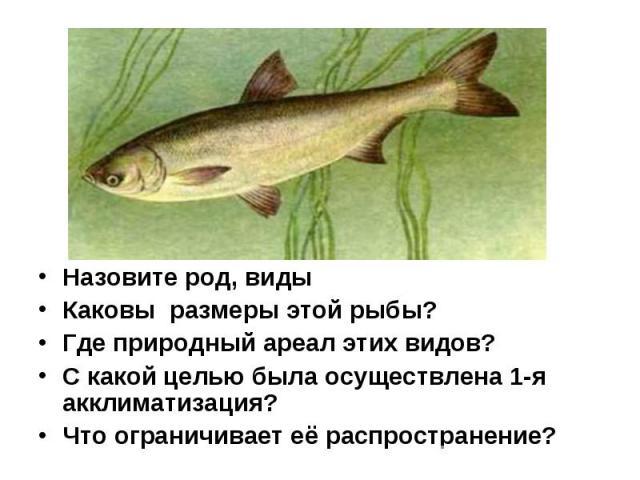 Назовите род, виды Каковы размеры этой рыбы? Где природный ареал этих видов? С какой целью была осуществлена 1-я акклиматизация? Что ограничивает её распространение?