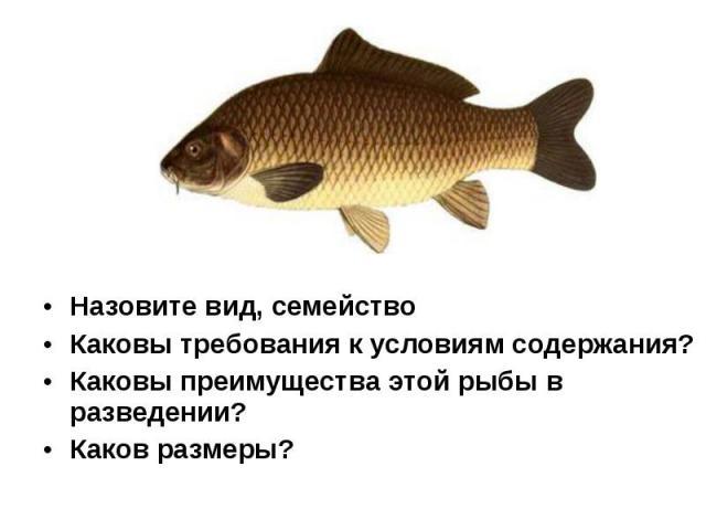 Назовите вид, семейство Назовите вид, семейство Каковы требования к условиям содержания? Каковы преимущества этой рыбы в разведении? Каков размеры?