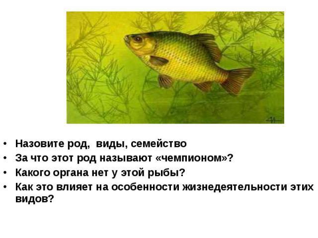 Назовите род, виды, семейство За что этот род называют «чемпионом»? Какого органа нет у этой рыбы? Как это влияет на особенности жизнедеятельности этих видов?