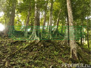 В соответствии с уменьшением годовых сумм осадков изменяются растительность и по