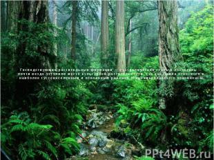 Господствующие растительные формации — субтропическая степь и лесостепь — почти
