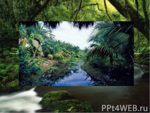 Южную часть меридионального прогиба между Андами и Бразильским нагорьем занимает Пампа. Она с трех сторон окружает эстуарий Ла-Плата, а на востоке и юго-востоке выходит к берегам Атлантического океана. С запада на значительном протяжении ее граница …
