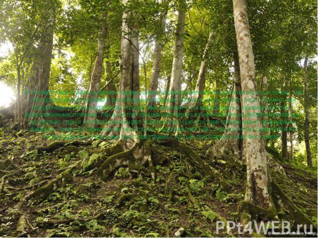 В соответствии с уменьшением годовых сумм осадков изменяются растительность и почвы. На юге Бразилии и в Уругвае в растительном покрове большую роль играют леса. Обычно они приурочены к речным долинам, но местами выходят и на водоразделы, занимая уч…
