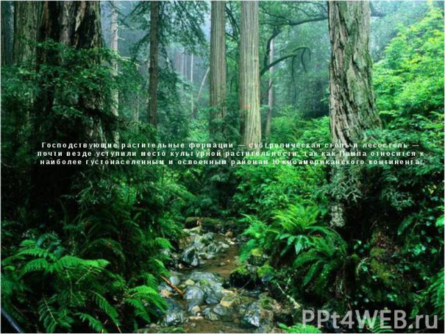 Господствующие растительные формации — субтропическая степь и лесостепь — почти везде уступили место культурной растительности, так как Пампа относится к наиболее густонаселенным и освоенным районам Южноамериканского континента.