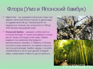 Флора (Умэ и Японский бамбук) Умэ(Ume) - так называется японская слива, ил