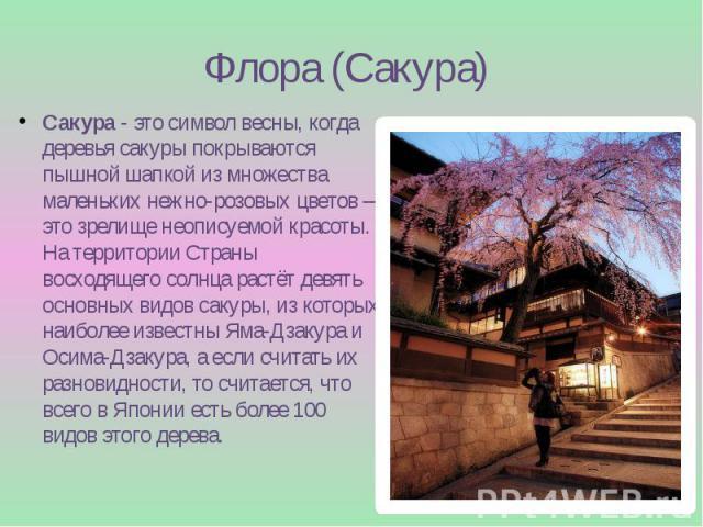 Флора (Сакура) Сакура- это символ весны, когда деревья сакуры покрываются пышной шапкой из множества маленьких нежно-розовых цветов – это зрелище неописуемой красоты. На территории Страны восходящего солнца растёт девять основных видов сакуры,…