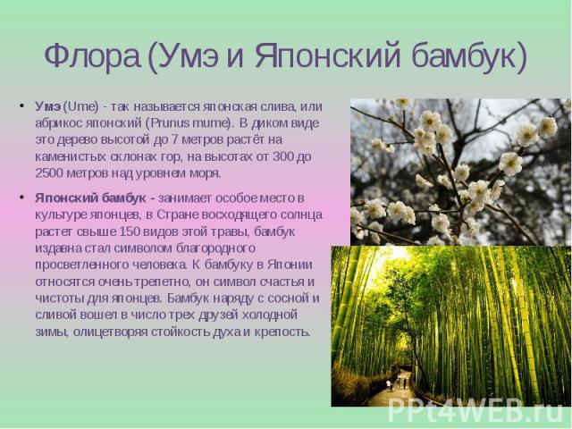 Флора (Умэ и Японский бамбук) Умэ(Ume) - так называется японская слива, или абрикос японский (Prunus mume). В диком виде это дерево высотой до 7 метров растёт на каменистых склонах гор, на высотах от 300 до 2500 метров над уровнем моря. Японск…