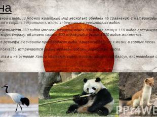 Фауна *Из-за островной изоляции Японии животный мир несколько обеднён по сравнен