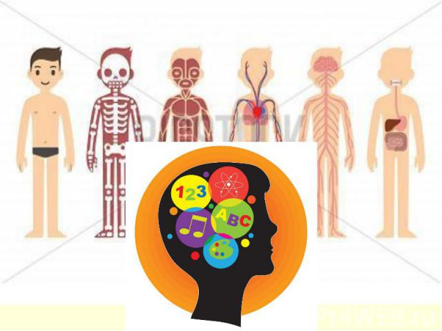 Органов у тела много, а пластичен мозг один!