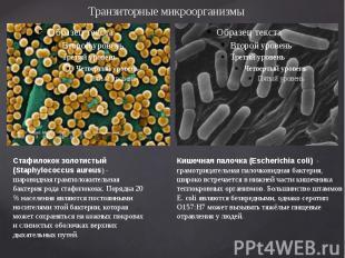 Транзиторные микроорганизмы