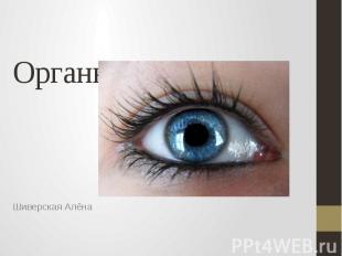 Органы чувств. Глаз. Шиверская Алёна
