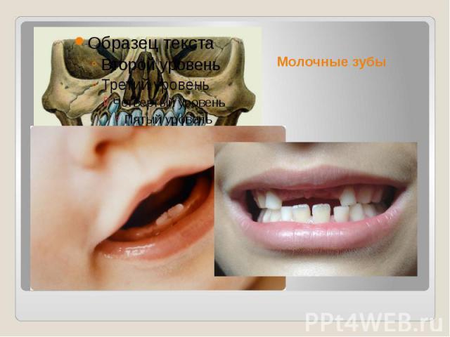 Молочные зубы Молочные зубы — первый комплект зубов у людей и многих других млекопитающих.