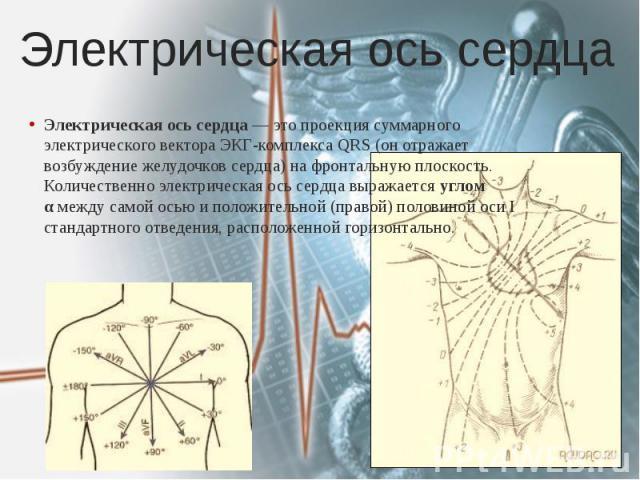 Электрическая ось сердца Электрическая ось сердца— это проекция суммарного электрического вектора ЭКГ-комплекса QRS (он отражает возбуждение желудочков сердца) на фронтальную плоскость. Количественно электрическая ось сердца выражается углом α…
