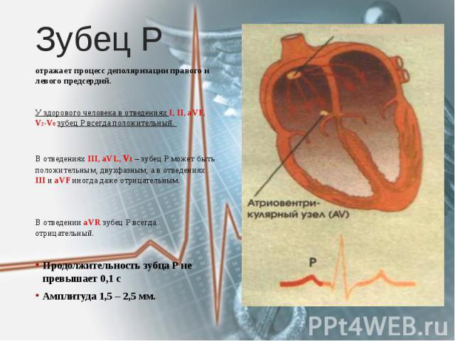 Зубец Р отражает процесс деполяризации правого и левого предсердий. У здорового человека в отведениях I, II, aVF, V2-V6 зубец Р всегда положительный. В отведениях III, aVL, v1 – зубец Р может быть положительным, двухфазным, а в отведениях III и аVF …