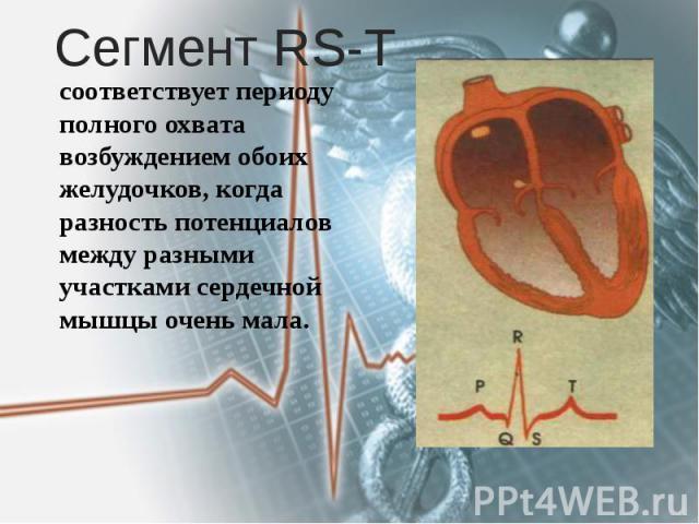 Сегмент RS-T соответствует периоду полного охвата возбуждением обоих желудочков, когда разность потенциалов между разными участками сердечной мышцы очень мала.