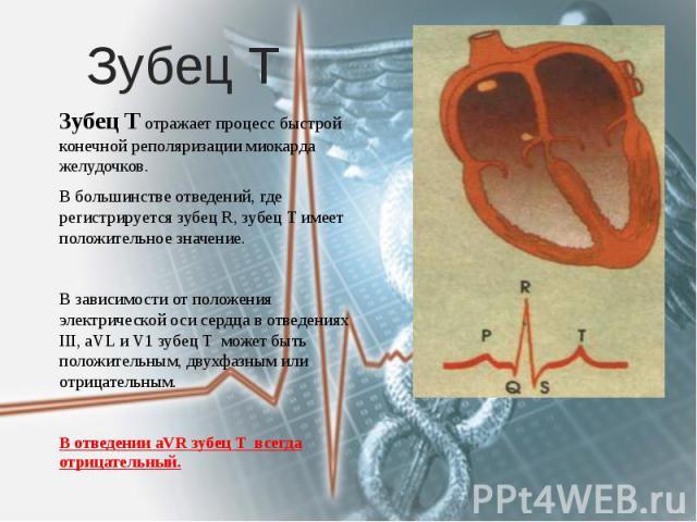 Зубец Т Зубец Т отражает процесс быстрой конечной реполяризации миокарда желудочков. В большинстве отведений, где регистрируется зубец R, зубец Т имеет положительное значение. В зависимости от положения электрической оси сердца в отведениях III, aVL…