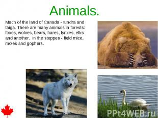 Animals. Much of the land of Canada - tundra and taiga. There are many animals i