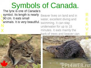 Symbols of Canada. The lynx is one of Canada's symbol. Its length is nearly 90 c