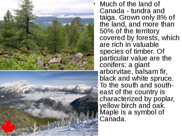Much of the land of Canada - tundra and taiga. Grown only 8% of the land, and more than 50% of the territory covered by forests, which are rich in valuable species of timber. Of particular value are the conifers: a giant arborvitae, balsam fir, blac…