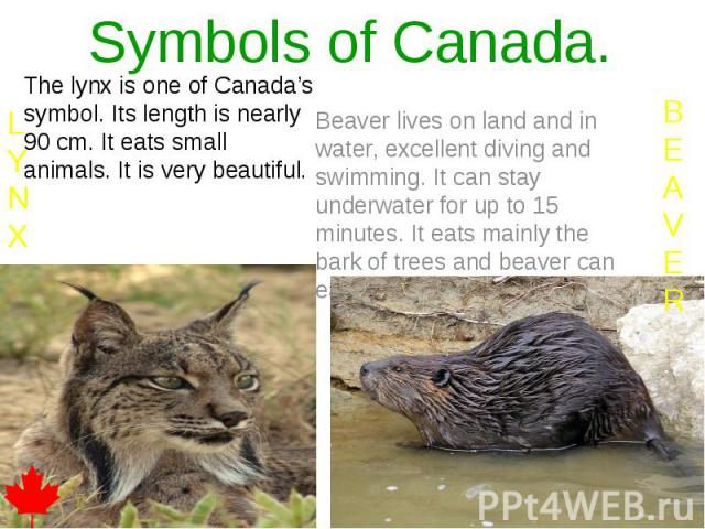Symbols of Canada. The lynx is one of Canada's symbol. Its length is nearly 90 cm. It eats small animals. It is very beautiful.