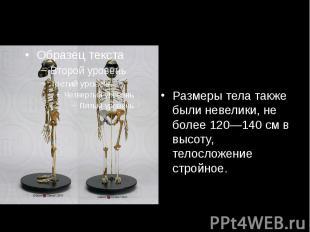 Размеры тела также были невелики, не более 120—140см в высоту, телосложение стр