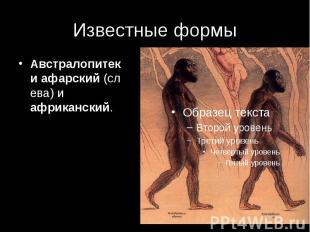 Известные формы Австралопитекиафарский(слева) и африканский.