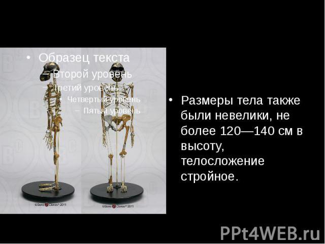 Размеры тела также были невелики, не более 120—140см в высоту, телосложение стройное.