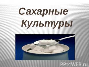 Сахарные Культуры