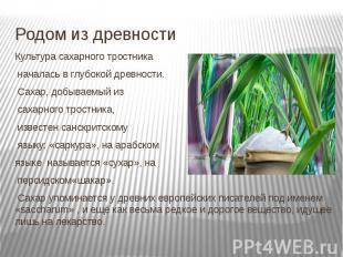 Родом из древности Культура сахарного тростника началась в глубокой древности. С
