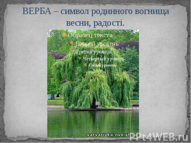 ВЕРБА – символ родинного вогнища весни, радості.