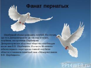 Фанат пернатых Щербицкий обожал разводить голубей. По слухам, где-то в Днепропет