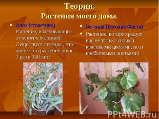 Теория.Растения моего дома.Алоэ (столетник)Растение, излечивающее от многих боле