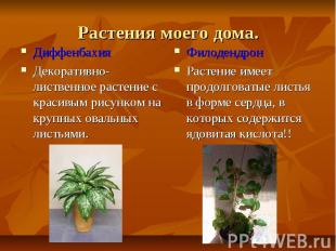 Растения моего дома.ДиффенбахияДекоративно-лиственное растение с красивым рисунк
