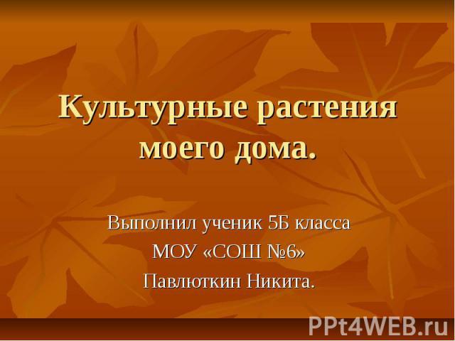 Культурные растения моего дома Выполнил ученик 5 Б класса МОУ «СОШ №6» Павлюткин Никита.