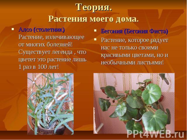 Теория.Растения моего дома.Алоэ (столетник)Растение, излечивающее от многих болезней!Существует легенда , что цветет это растение лишь 1 раз в 100 лет!Бегония (Бегония Фиста)Растение, которое радует нас не только своими красивыми цветами, но и необы…