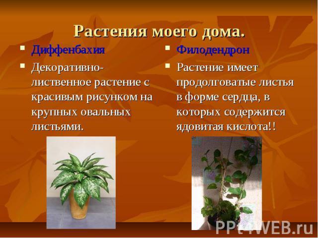 Растения моего дома.ДиффенбахияДекоративно-лиственное растение с красивым рисунком на крупных овальных листьями.ФилодендронРастение имеет продолговатые листья в форме сердца, в которых содержится ядовитая кислота!!