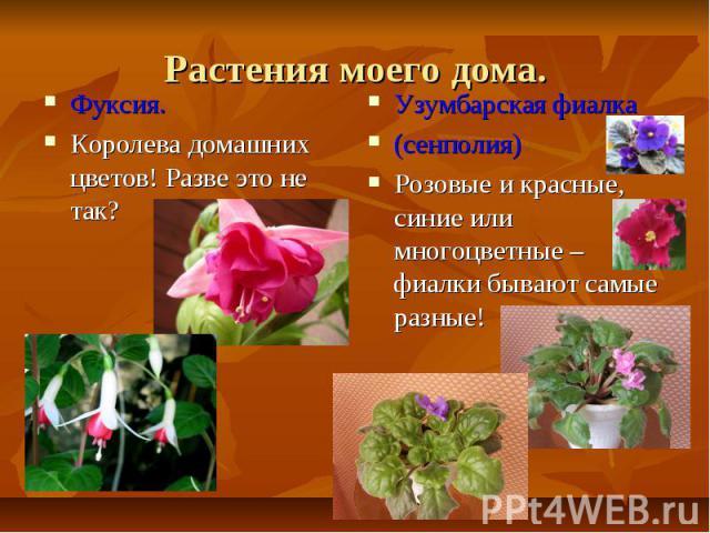 Растения моего дома.Фуксия.Королева домашних цветов! Разве это не так?Узумбарская фиалка (сенполия)Розовые и красные, синие или многоцветные – фиалки бывают самые разные!