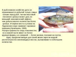 В рыболовном хозяйстве дело не ограничивается добычей только самых лучших пород