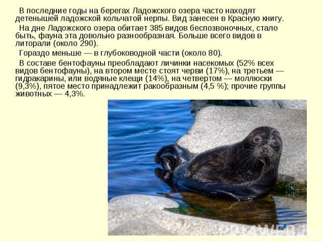 В последние годы на берегах Ладожского озера часто находят детенышей ладожской кольчатой нерпы. Вид занесен в Красную книгу. На дне Ладожского озера обитает 385 видов беспозвоночных, стало быть, фауна эта довольно разнообразная. Больше всего видов в…