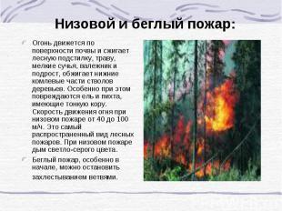 Низовой и беглый пожар: Огонь движется по поверхности почвы и сжигает лесную под