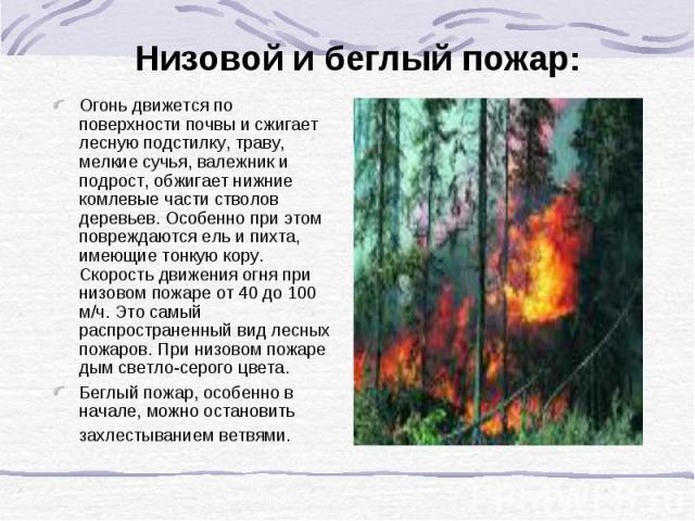 Низовой и беглый пожар: Огонь движется по поверхности почвы и сжигает лесную подстилку, траву, мелкие сучья, валежник и подрост, обжигает нижние комлевые части стволов деревьев. Особенно при этом повреждаются ель и пихта, имеющие тонкую кору. Скорос…
